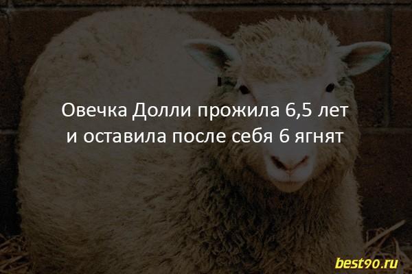 fakty-4 2