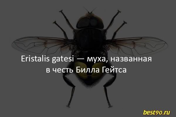 fakty-11 8