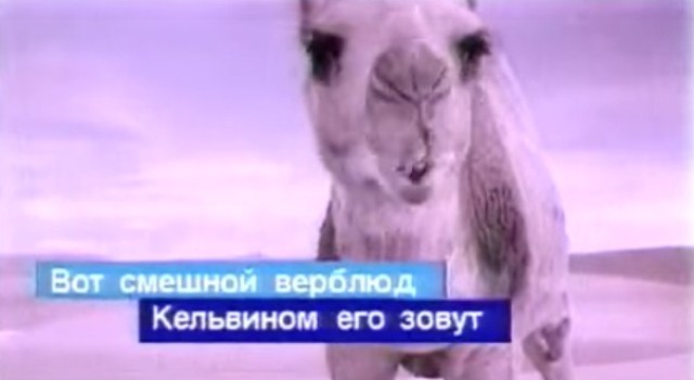 Верблюд поет